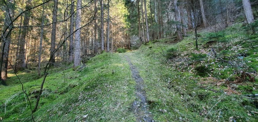 chopfwald grüsch
