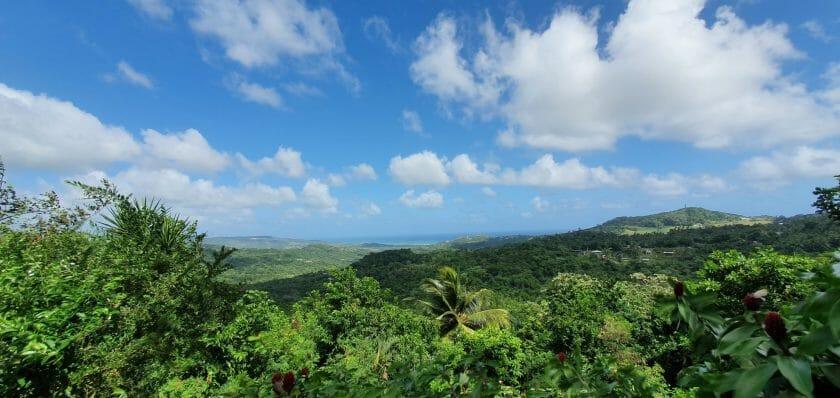 Botanische Gärten auf Barbados Flower Forest