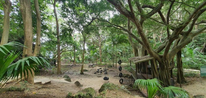 Welchman Hall Gully Botanische Gärten auf Barbados